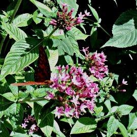 Butterfly Garden at The Florida Botanical Gardens